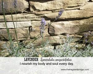 Lavender affirmation