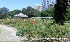 A Rose Garden in the Royal Botanical Gardens, Sydney. Australia
