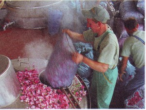 Rose petals being poured into vat