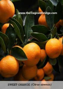 Sweet Orange CFTS Card