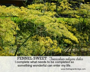 Sweet Fennel - Fragrant Change healing card