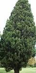 Cypress 9