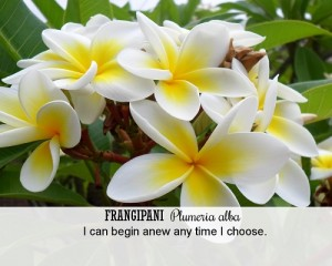 Fragipani Fragrant Change Healing Card