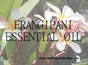 Frangipani header