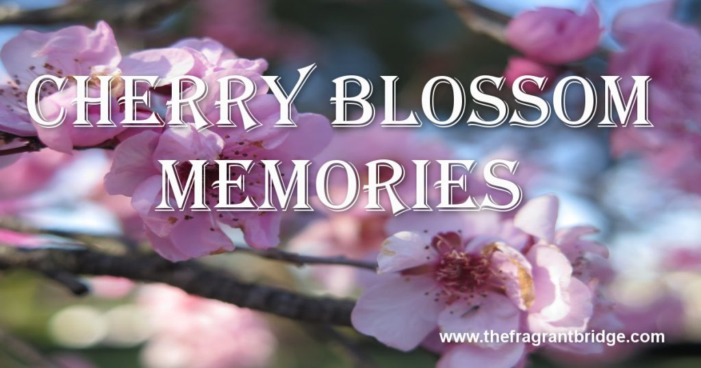 Cherry blossom memories