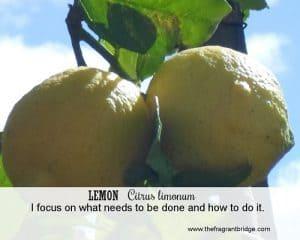 lemon FCHC