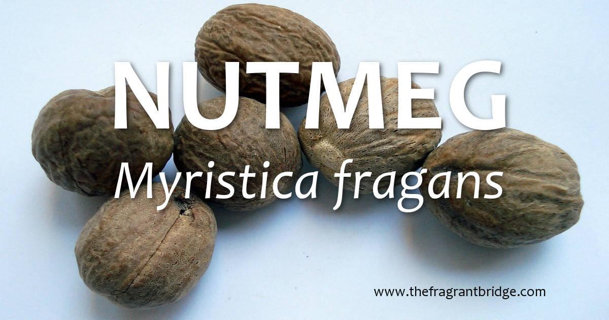 Nutmeg (Myristica fragans)