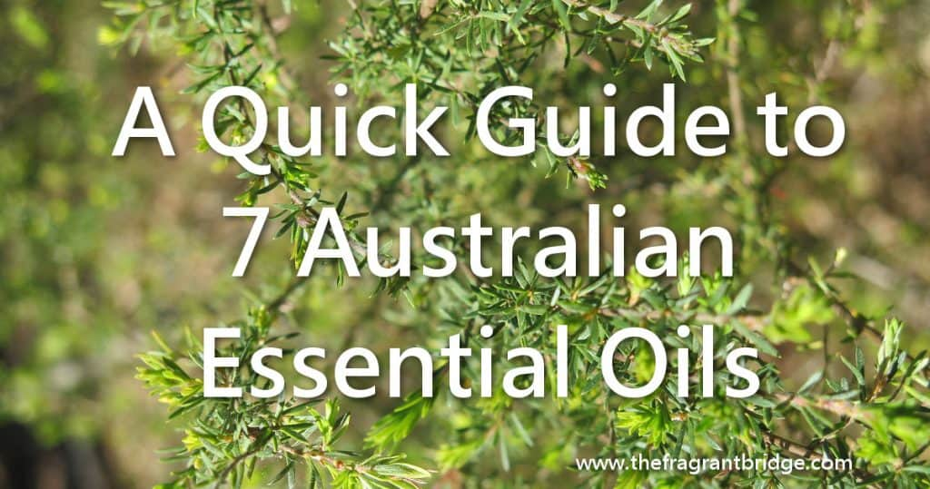 A Quick Guide to 7 Australian Essential Oils header