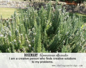 rosemary Fragrant Change Healing card
