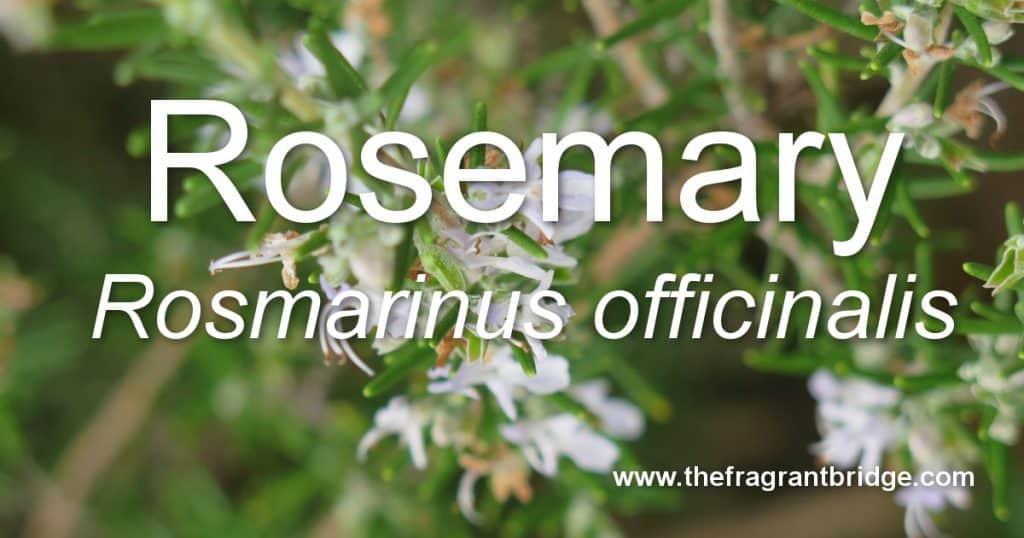 rosemary header