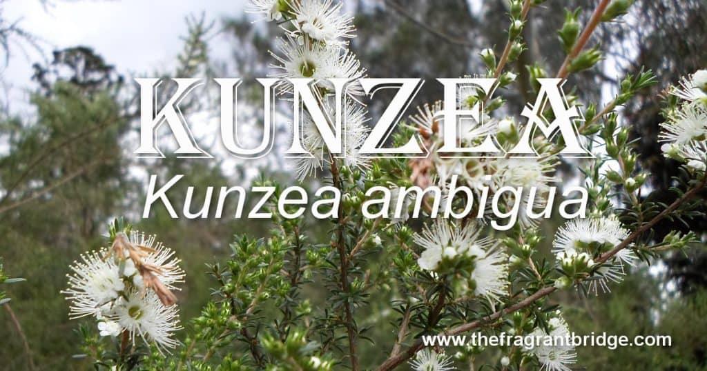 Kunzea