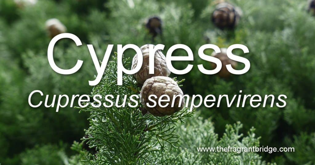 Cypress header
