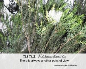 Tea tree Fragrant Change healing card
