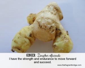 Ginger FCHC