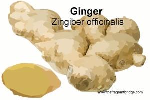 Ginger header