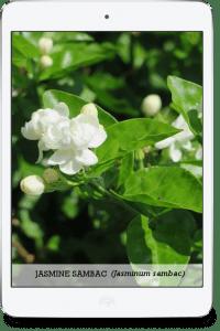 ipad-jasmine