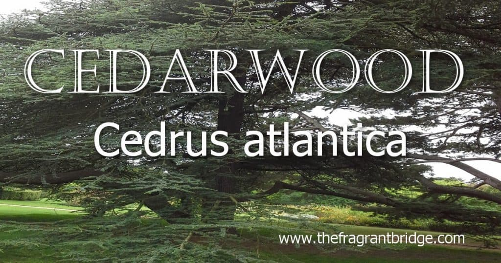 Cedarwood header