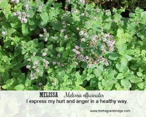 Melissa FCHC