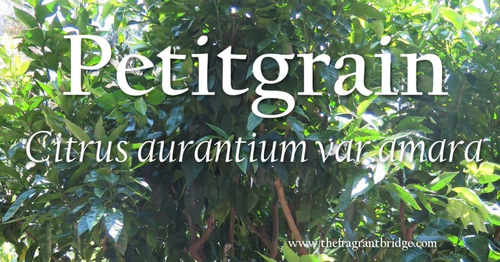 Petitgrain header