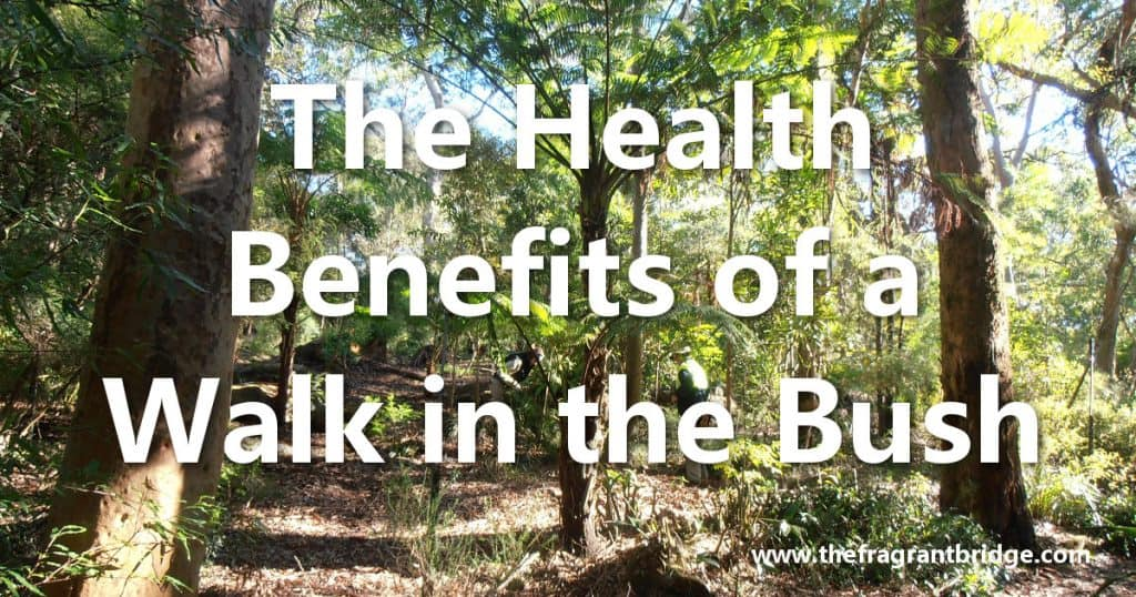 The Health Benefits of a Walk in the Bush
