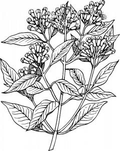 clove branch
