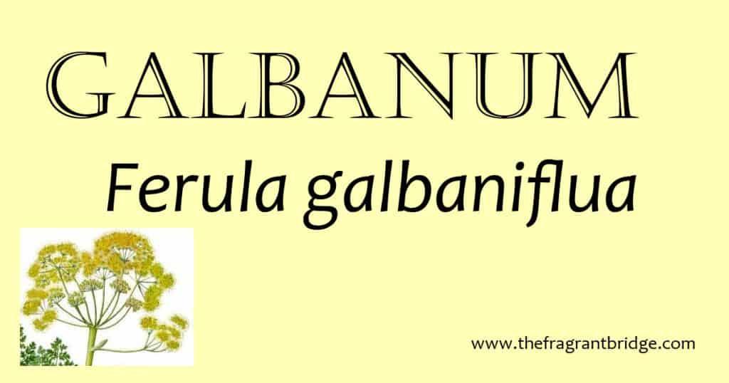 Galbanum header