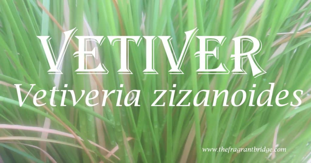 Vetiver header