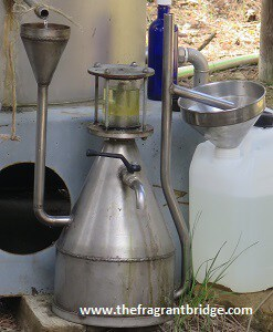 Lavender-distillation-and-hydrosol-1.jpg