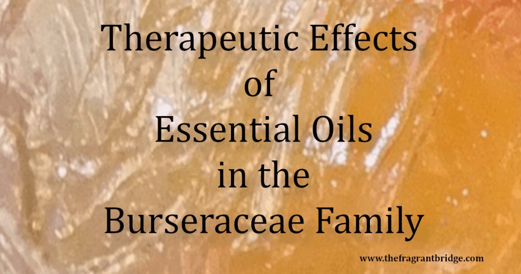 Therapeutic Effects of Essential Oils in the Burseraceae Family Header