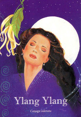 Ylang Ylang Insight Card