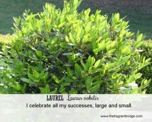 Laurel FCHC