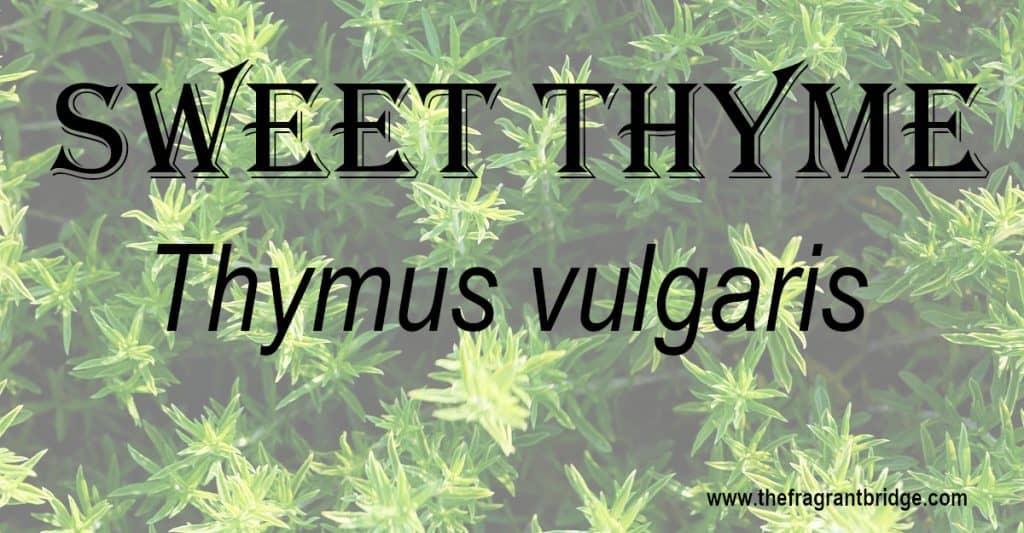 Sweet thyme header
